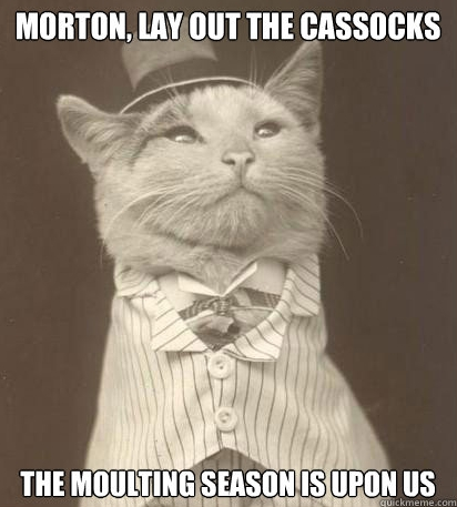 The Rector's Cat